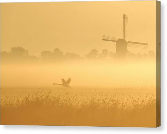 Swan Canvas Print - _i_ by Annemieke