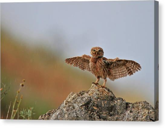 Israeli Canvas Print - I Can Fly..!!!!!! by Muayad Amer
