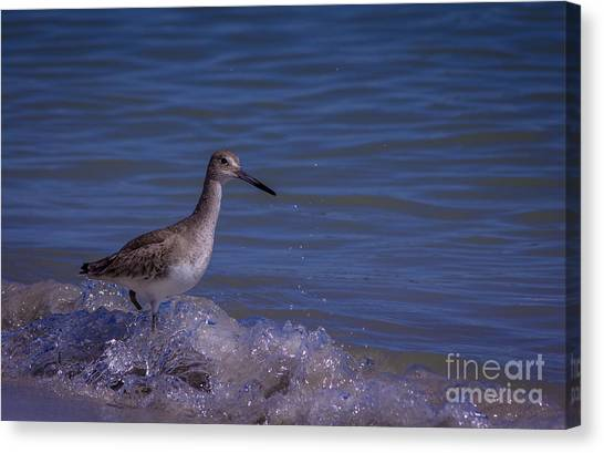 Sandpipers Canvas Print - I Can Make It by Marvin Spates