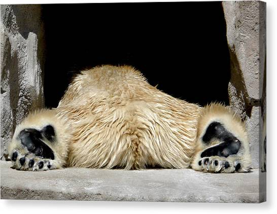I Cant Bear It Canvas Print