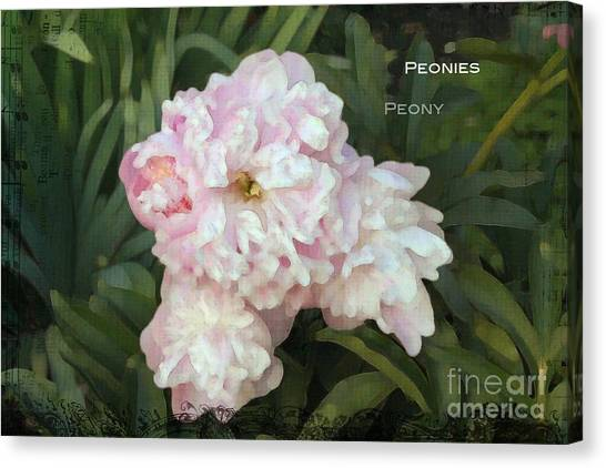 I Cry For You My Peonies Canvas Print