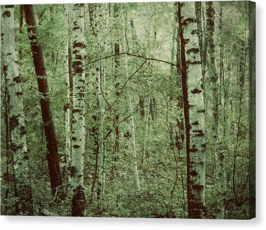Dreams Of A Forest Canvas Print