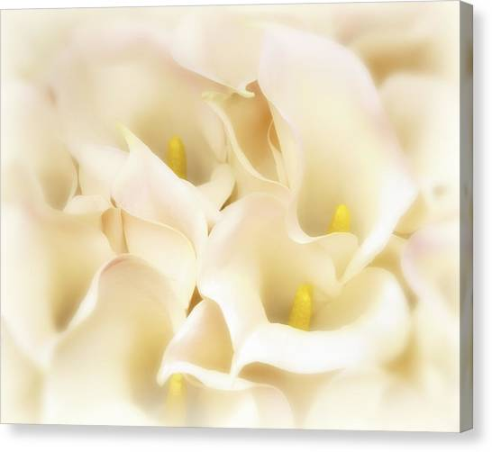 I Dreamed Of Calla Lilies Canvas Print