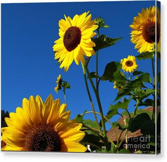 I Girasoli Dietro Casa Mia - Sunflowers In The Field Behind My House. Canvas Print