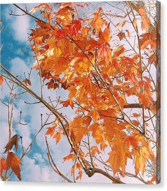 Orange Tree Canvas Print - I Like What I See 🍁🍂 #nature by Kika Verde