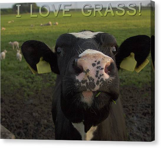 I Love Grass --said The Cow. Canvas Print