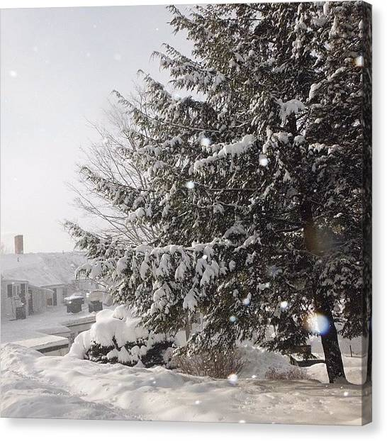 Spam Canvas Print - I Love Snow On Trees! <3 #winter by Zoe Sutter