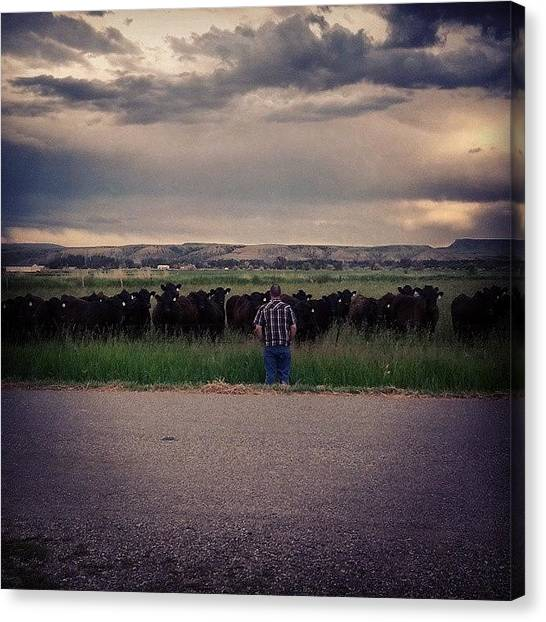 Big Sky Canvas Print - The Cow Whisperer by Denette Jacobson
