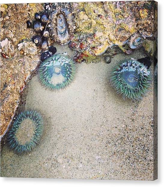 Biology Canvas Print - I Met Sea Anemones by Katie Cupcakes