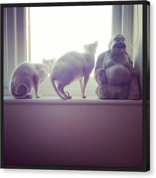 Sphynx Cats Canvas Print - I Moved Our Bed To Under The Window by Samantha Charity Hall