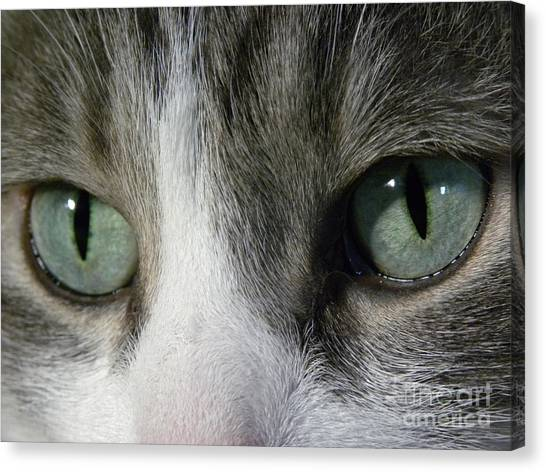 I Only Have Eyes For You Canvas Print by Laura Yamada