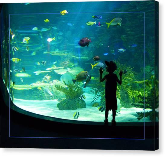 I See Fish Canvas Print
