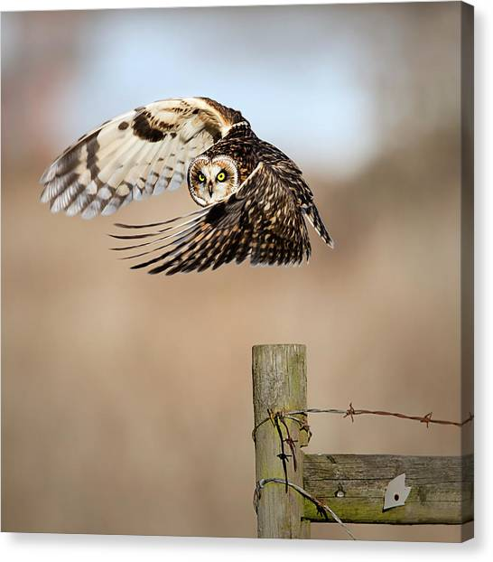 I See You! Canvas Print by Fion Wong