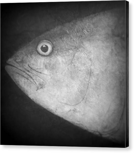 I See You - Fish Canvas Print by Patricia Januszkiewicz