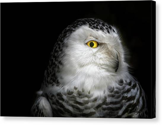 Eagles Canvas Print - I See You by Michael