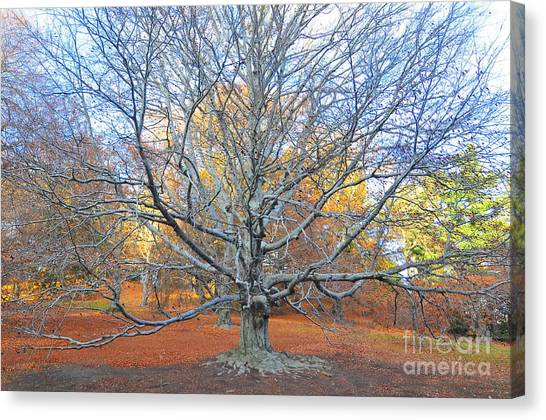 Catherine Reusch Daley Fine Artist Canvas Print - I Stand Alone by Catherine Reusch Daley