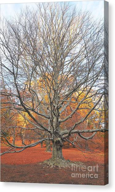 Catherine Reusch Daley Fine Artist Canvas Print - I Stand Alone II by Catherine Reusch Daley