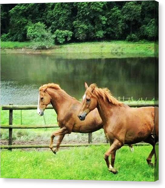 Horse Farms Canvas Print - I Think They Were Just Checking To If by Joyks Rickards