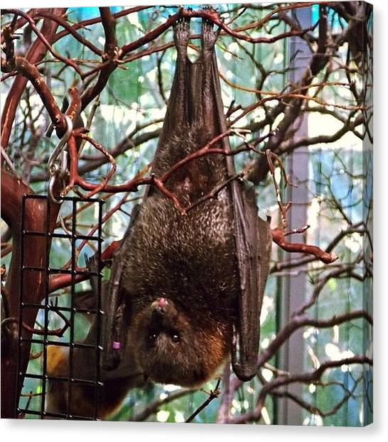 Bats Canvas Print - I Vant To Bite Your Neck. Okay, Not by Michele Beere