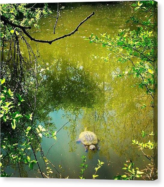 Turtles Canvas Print - I Was Looking To For A Closer Shot Of by Mr. B