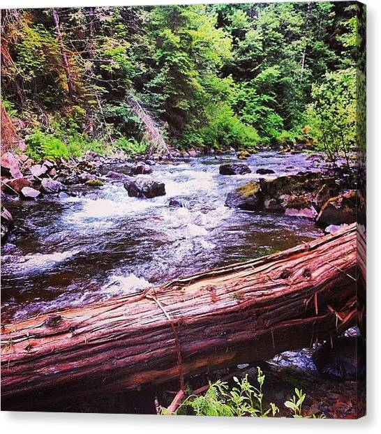 Wilderness Canvas Print - I Was Up In Gifford Pinchot National by Mike Warner