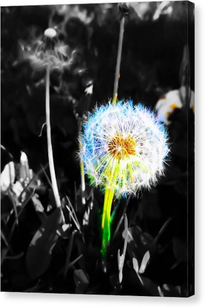 I Wish....... Canvas Print by  Julia Gatti