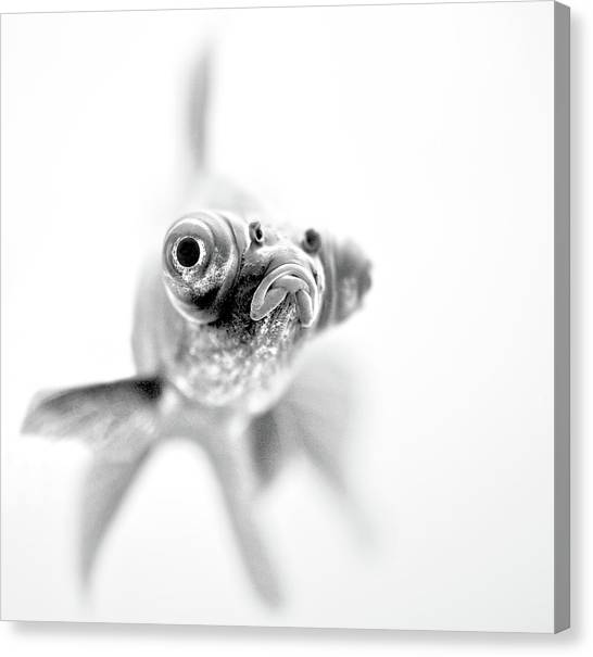 Fish Canvas Print - I'm Ready For My Close Up... by