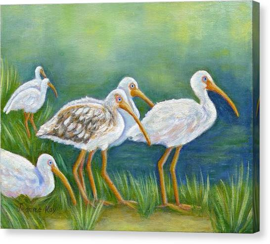 Ibis Flock With Juvenile Canvas Print