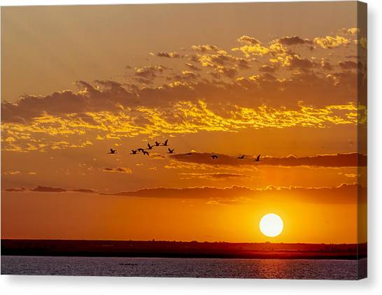 Canvas Print featuring the photograph Ibis Flyover At Sunset by Rob Graham