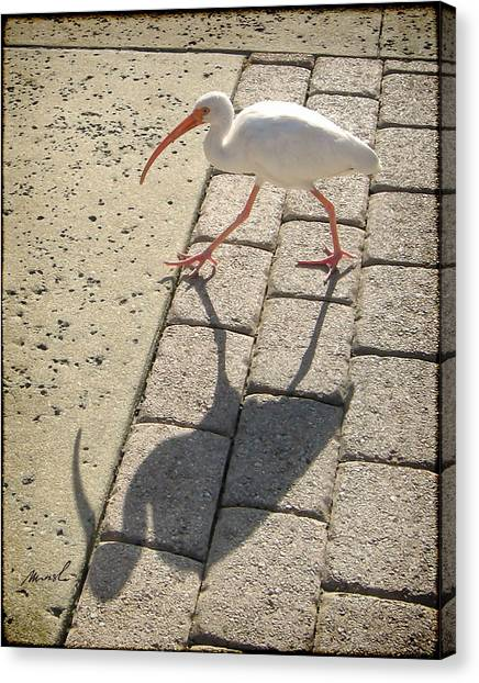 Pavers Canvas Print - Ibis by The Art of Marsha Charlebois