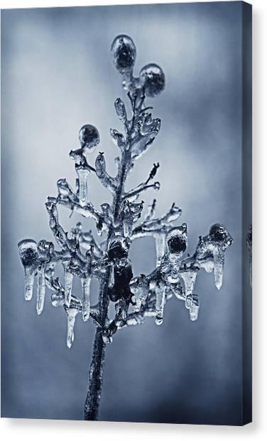 Ice Bouquet Canvas Print