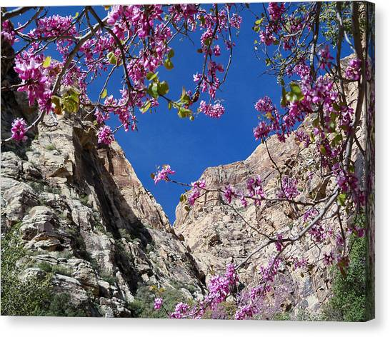 Ice Box Canyon In April Canvas Print