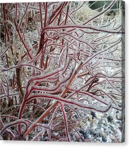 South Dakota Canvas Print - Ice Covered Bushes by Jesse Peterson