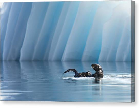 Otter Pop Canvas Print