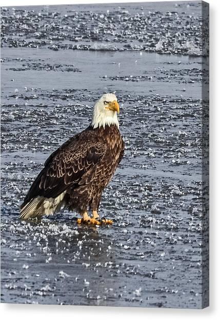 Ice Eagle Canvas Print