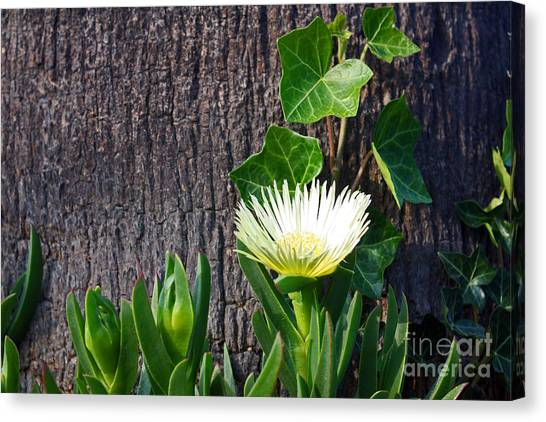 Ice Flower With Vine Canvas Print