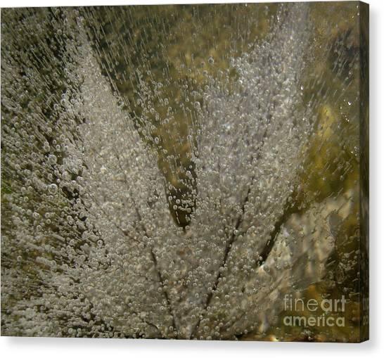 Ice Maple Canvas Print