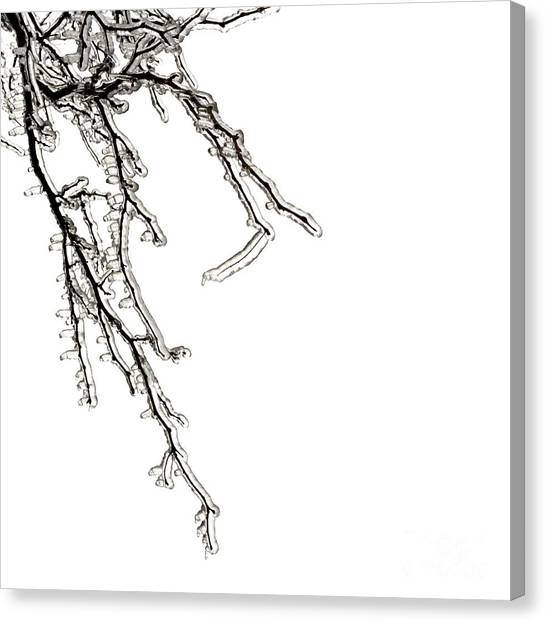 Ice Crystal Canvas Print - Ice On Branches by Blink Images