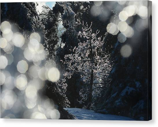 Ice Tree-5074 Canvas Print