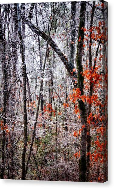 Ice Trees Canvas Print