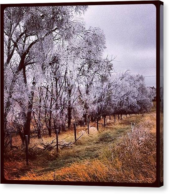 Orchard Canvas Print - Ice Trees by M Hunter