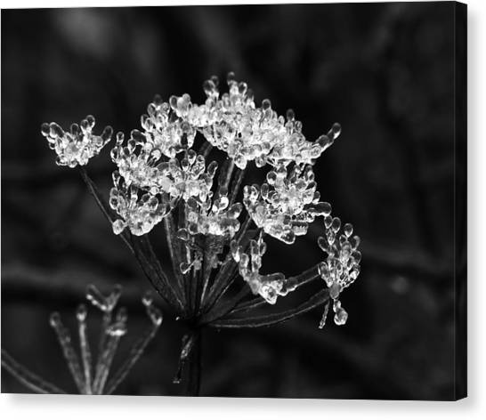 Ice Weed Canvas Print
