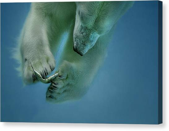 Powerful Canvas Print - Icebaer by Peter Wagner