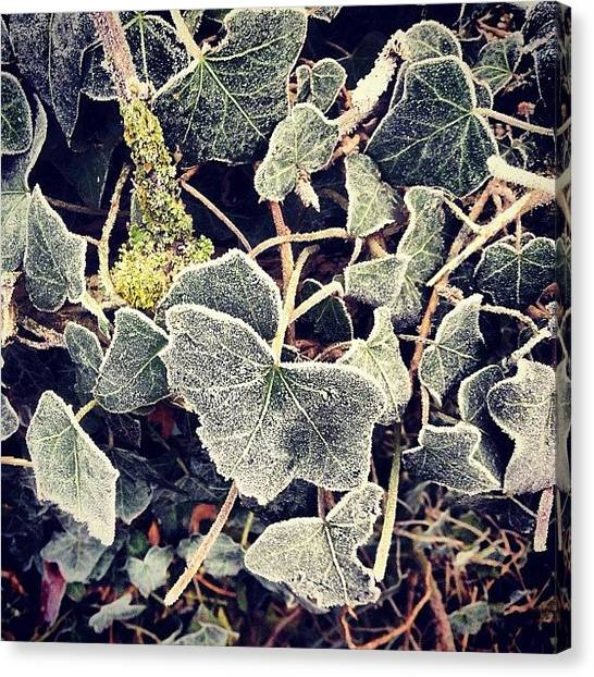 Forest Canvas Print - Iced Ivy by Nic Squirrell