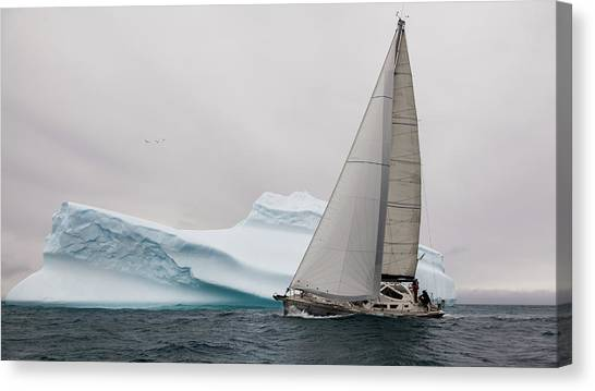 Sail Boats Canvas Print - Iced by Simon Delvoye