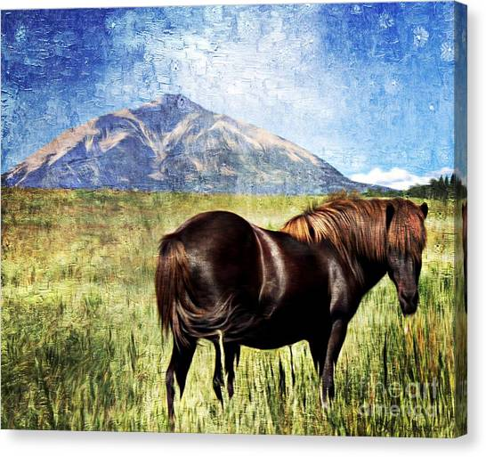 Eyjafjallajokull Canvas Print - Icelandic Horse by Barbara Chichester
