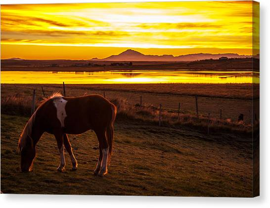 Icelandic Sunrise Canvas Print
