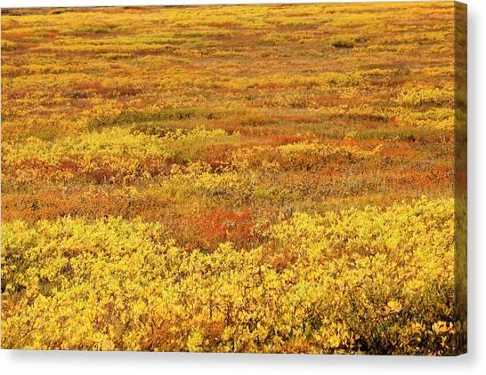 Tundras Canvas Print - Icelandic Tundra by Ashley Cooper