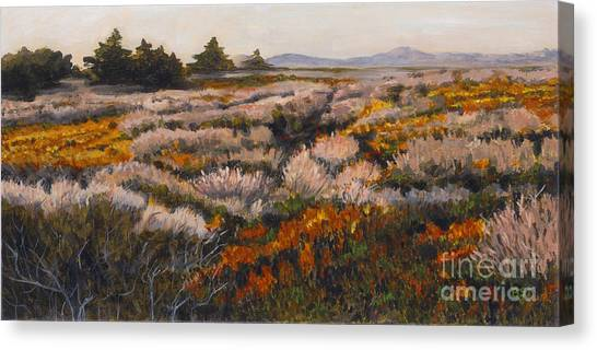 Iceplant And Chaparral Canvas Print by Betsee  Talavera