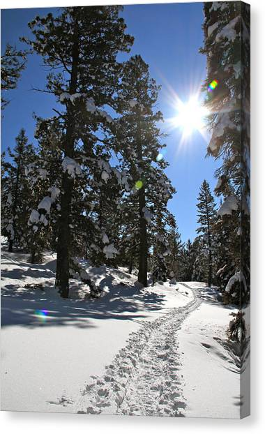 Boise National Forest Canvas Print - Idaho Blue Bird Day by Ed  Riche